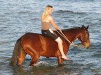 Culver Horseback Riding Lessons Fombell PA