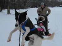 arctic-paws-dog-sled-tours-in-pa