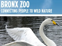 bronx-zoo-top-25-attractions-ny