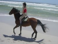Fox Heath Horseback Riding Lessons Furlong PA
