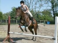 Painted Horseback Riding Lessons Wrightstown PA