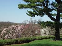 Morris Arboretum Philadelphia