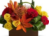 Phoebe Flower Delivery Services in Pennsylvania