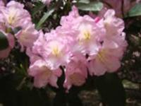 tyler_arboretum_pennsylvania