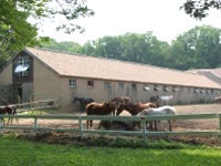 Horseback Riding Lessons Philadelphia