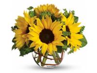 philadelphia-florists-orchid-flower-shop