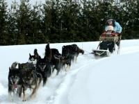 dog-sledding-in-pa