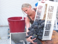 wine-making-in-pa