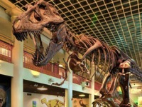 science-museum-philadelphia-the-academy-of-natural-sciences